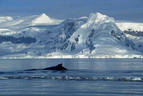 antartica17